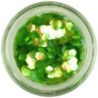 Hexagon nail art verde - elemente aqua